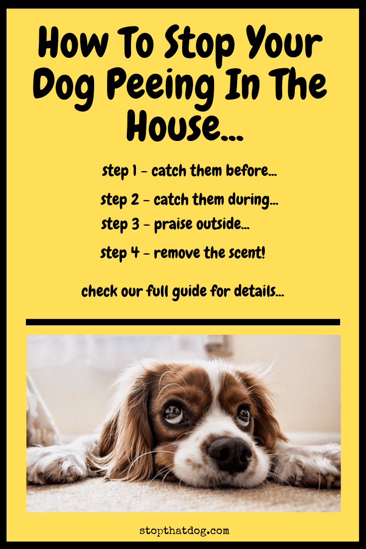 How to Help Your Dog During a Seizure forecasting