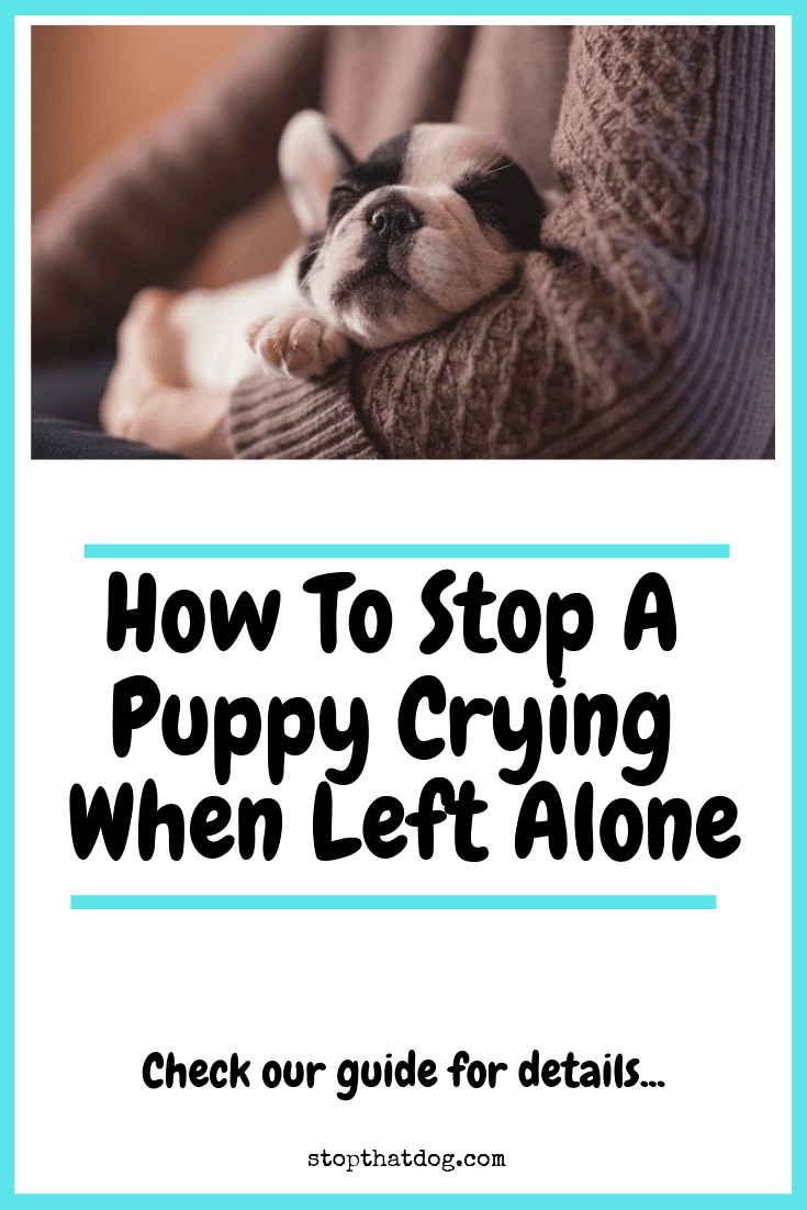 How to stop your dog from crying all the time