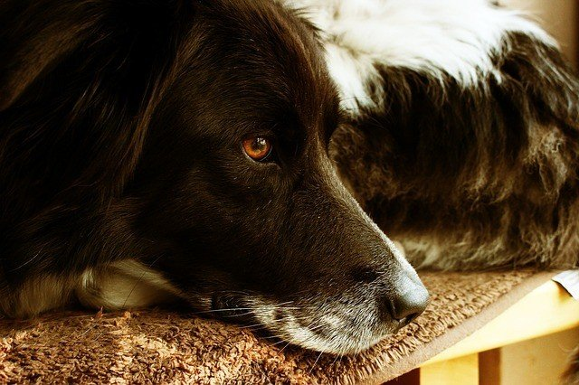 Do Dogs Get Bored? Here's What You Need To Know 5