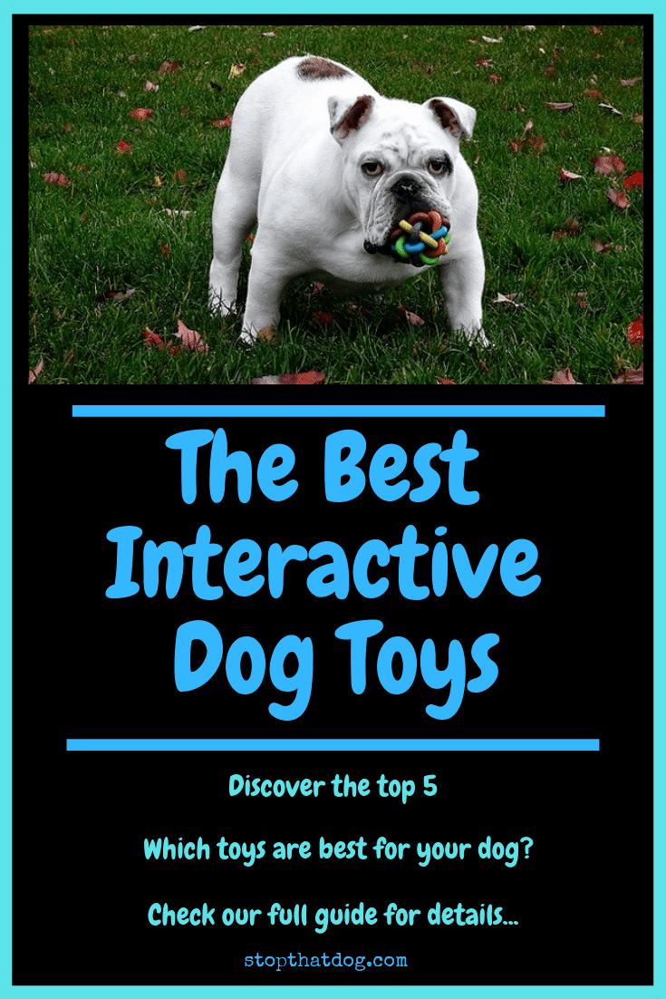 Best Interactive Dog Toys Your Ultimate Guide Stop