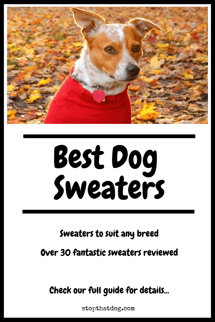 0a5f0b119349 Best Dog Sweaters - Our Favorite Picks - Stop That Dog!