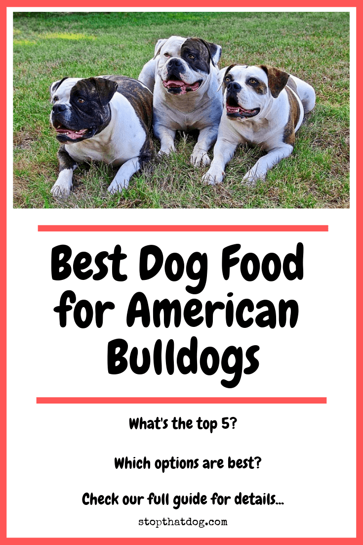 Best Dog Food For American Bulldogs Perfect Choices That Your Dog