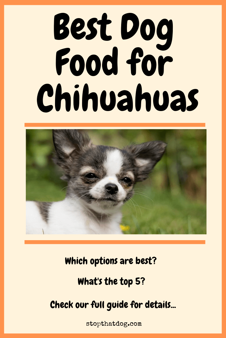 Best Dog Food For Chihuahuas Here S Your Ultimate Guide