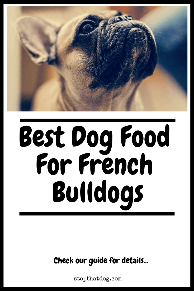 best food for french bulldog the best dog food for french bulldogs a complete guide 6848