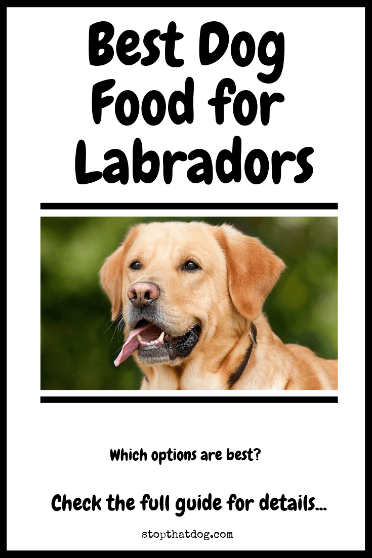 Best Dog Food For Labradors The Perfect Choice Stop