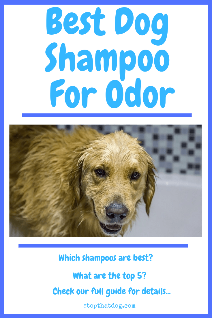 Shampoo for dogs: its varieties and differences from human 26