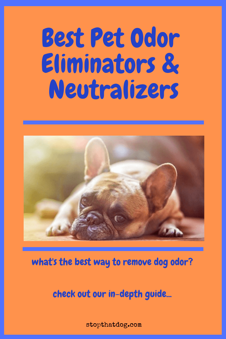 The Best Pet Odor Eliminators Amp Neutralizers Here S How
