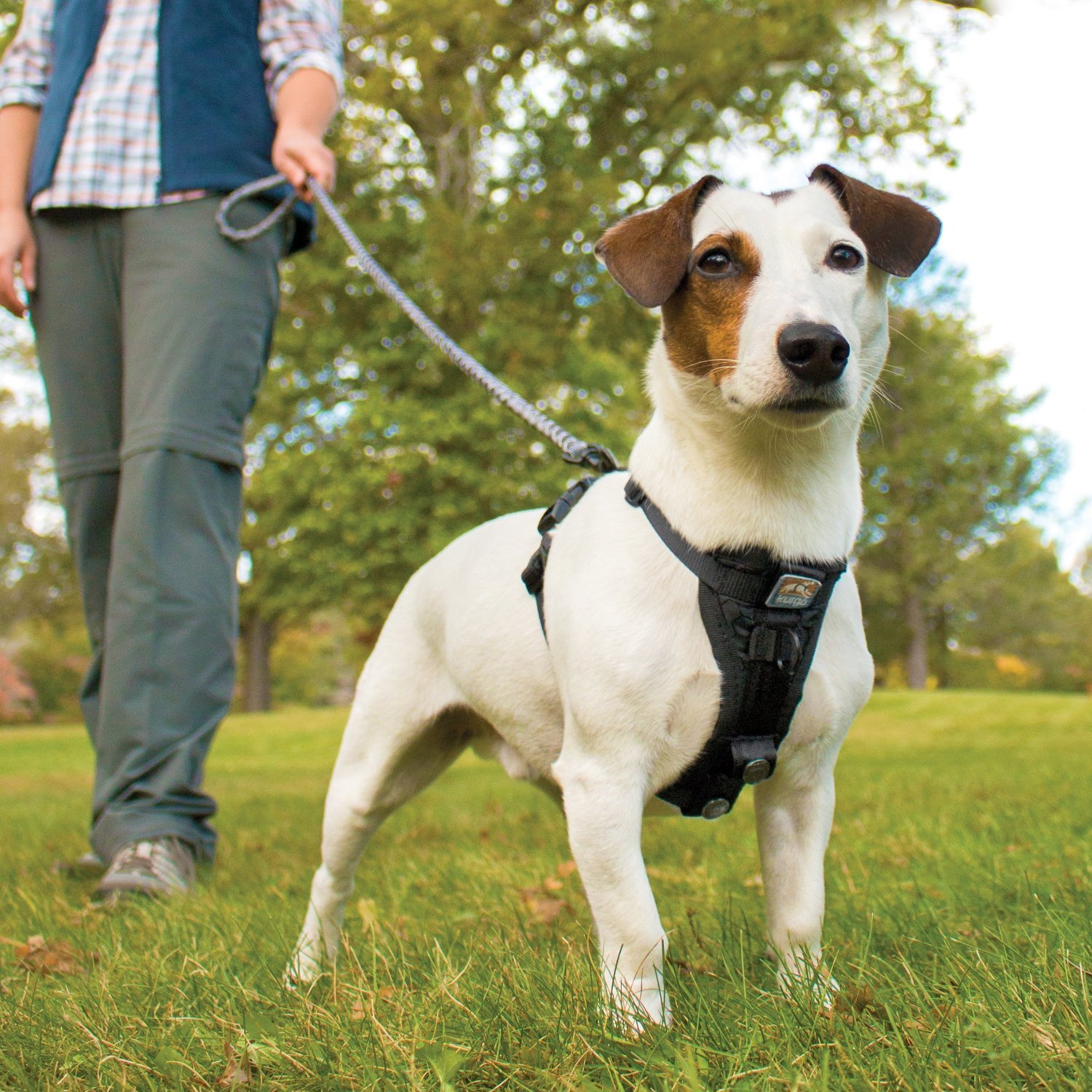 The Best Leashes And Harnesses For Dogs That Pull The