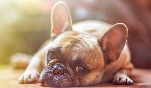 The Best Pet Odor Eliminators & Neutralizers – Here's How To Remove Pet Odor From Your Home