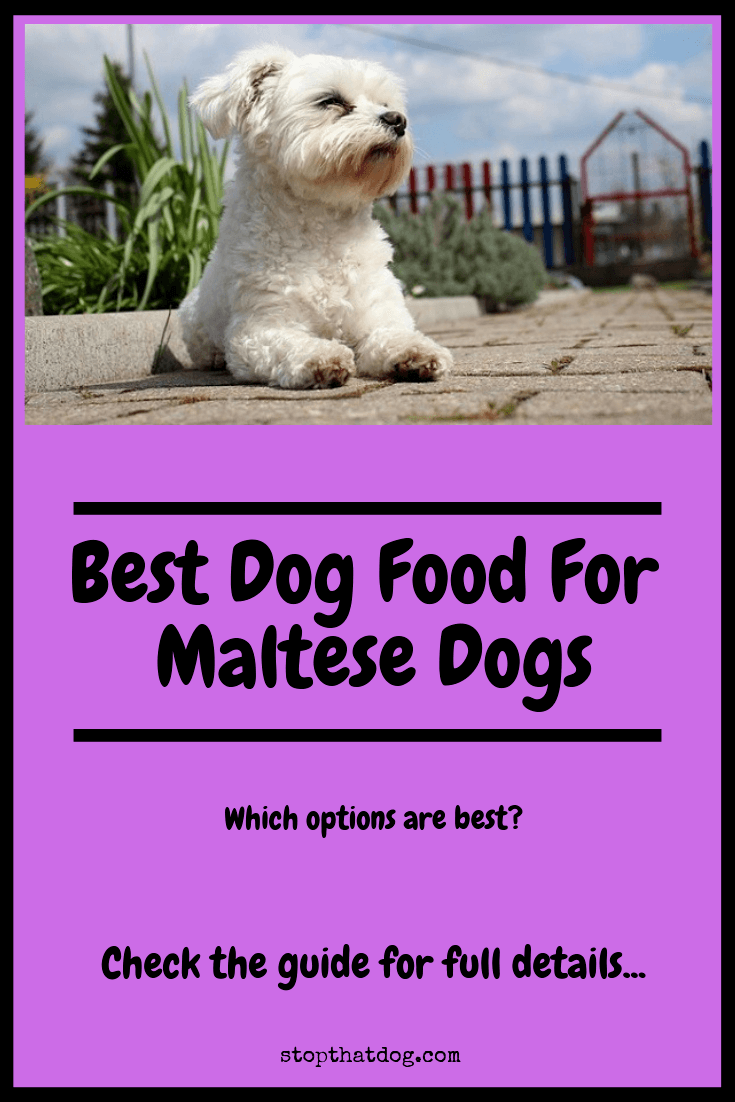 Best Dog Food For Maltese Dogs Our Top Picks Stop That