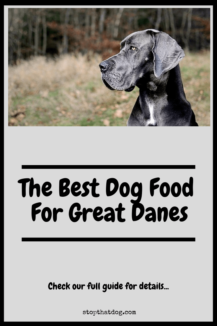 The Best Dog Food For Great Danes Stop That Dog