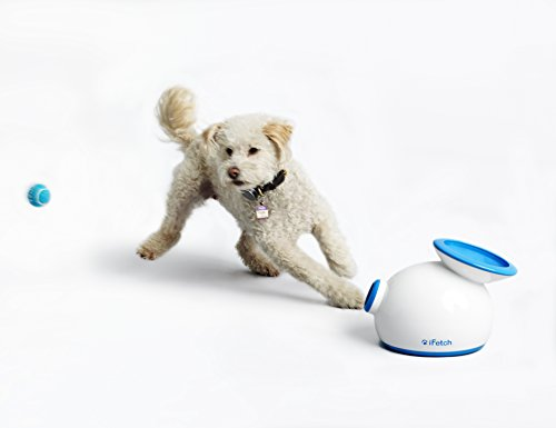 What Are The Best Interactive Dog Toys? Our Complete Guide 3