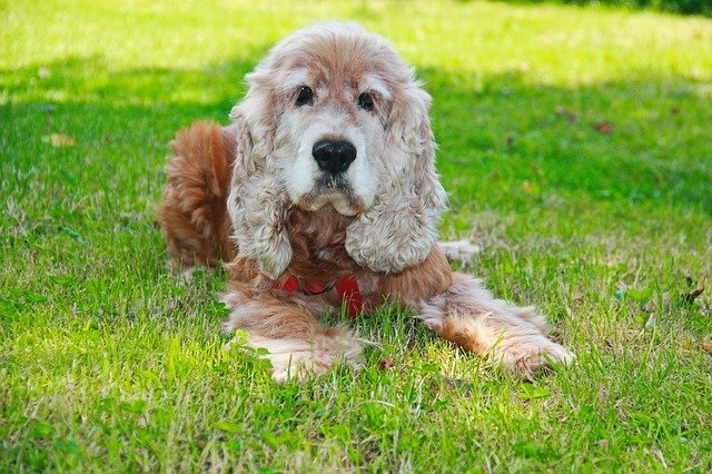 Why Is My Dog Eating Grass? Causes & Solutions 7