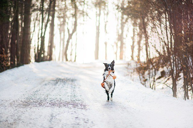 9 Key Tips For Protecting Your Dog In Winter 2