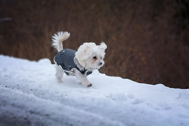9 Key Tips For Protecting Your Dog In Winter 3