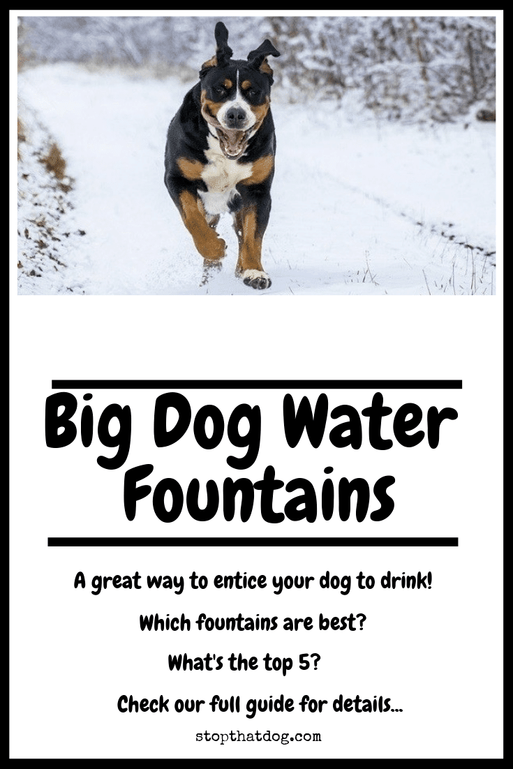 Big Dog Water Fountains A Great Way To Entice Your Dog