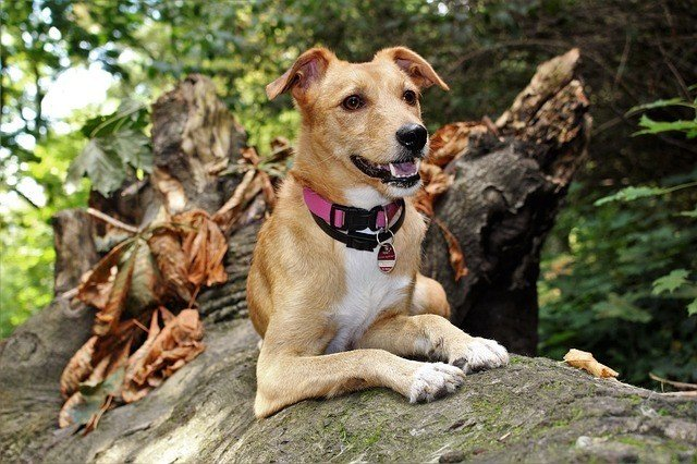 Is The Ruffwear Webmaster Harness Any Good? Here's Our Review 4