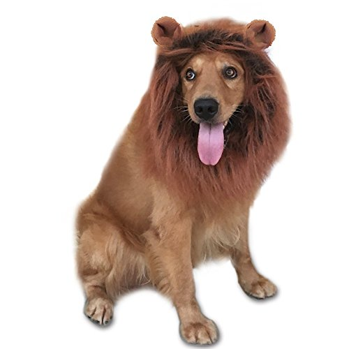 Where Can I Find A Lion Mane Dog Costume? 4