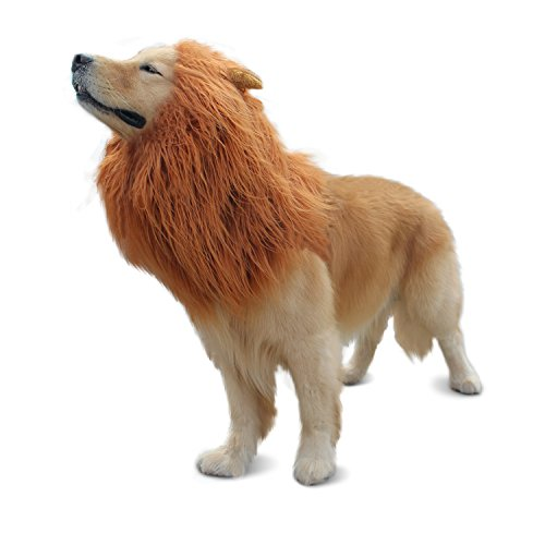 Where Can I Find A Lion Mane Dog Costume? 10
