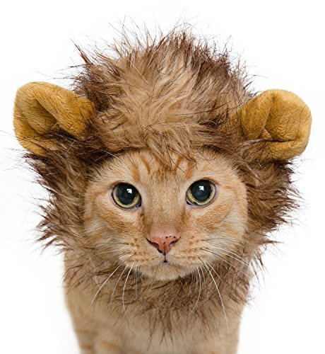 Where Can I Find A Lion Mane Dog Costume? 13