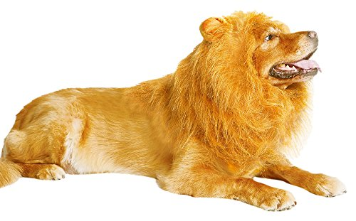 Where Can I Find A Lion Mane Dog Costume? 20