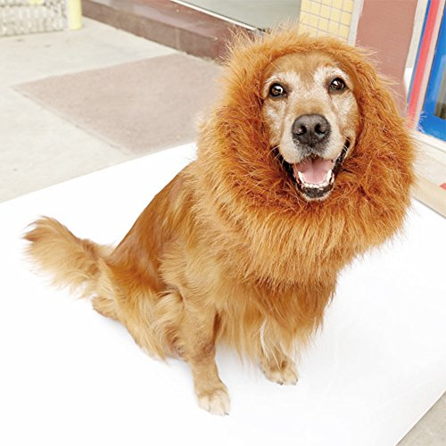 Where Can I Find A Lion Mane Dog Costume? 12