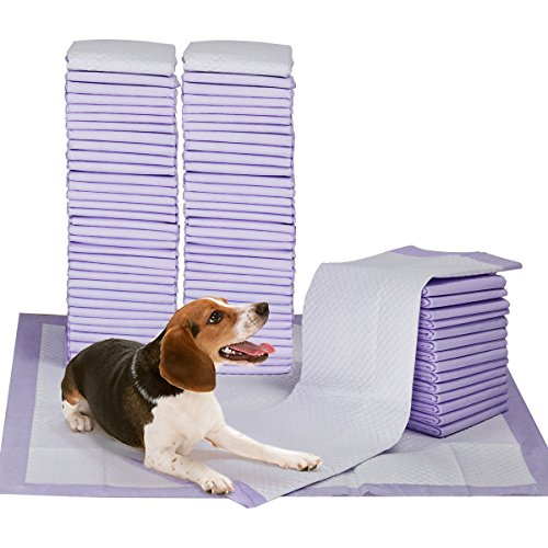 What's The Best Puppy Pee & Potty Training Pad? (+ Floor Trays & Holders!) 3