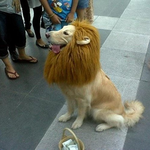 Where Can I Find A Lion Mane Dog Costume? 15