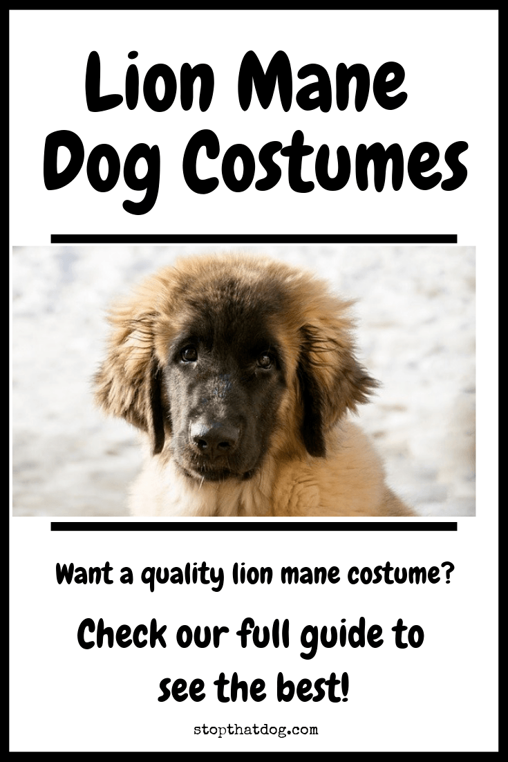 Lion Mane Dog Costumes - The Best Outfits Around - Stop That Dog!