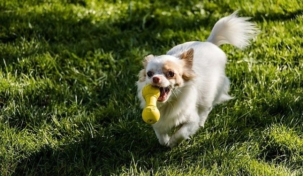 How To Teach Your Dog To Put Their Toys Away - A Step By Step Guide 4