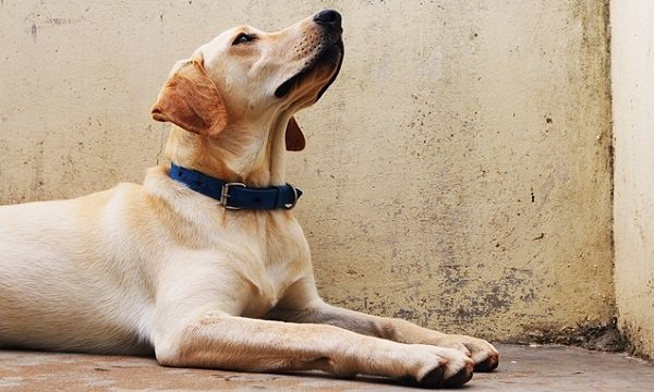 Dog Training 101: Basic Obedience Commands Every Dog Must Know 4