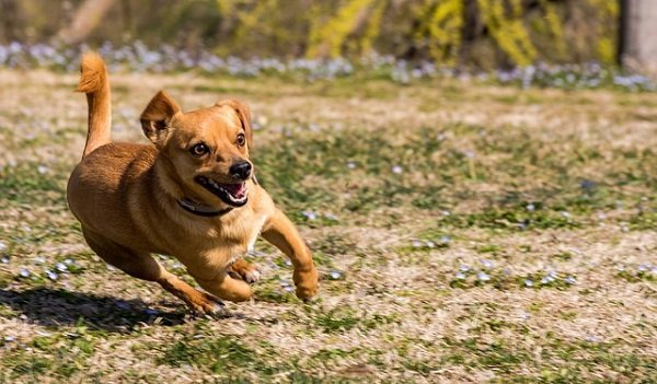 What's The Best Dewormer For Dogs? Your In-Depth Guide 5