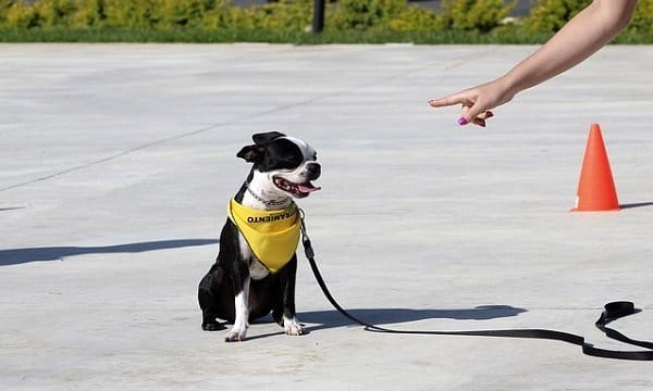Dog Training 101: Basic Obedience Commands Every Dog Must Know 5